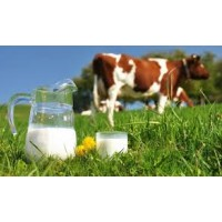 """The third round of the investment project """"Family Dairy Farms"""" starts in Ukraine"""